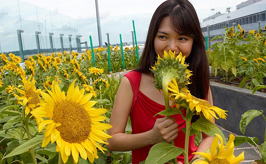 Sunflower Garden, Changi International Airport